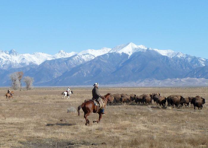 Herding bison, Zapata Ranch