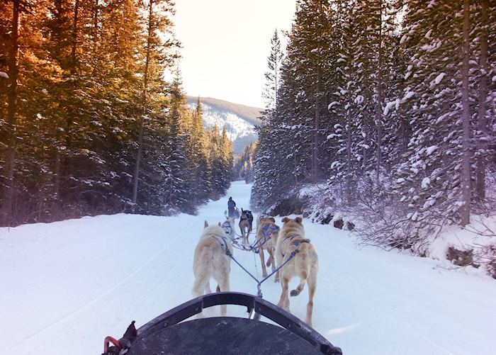 Dog-sledding and Mushing Experience, Jasper