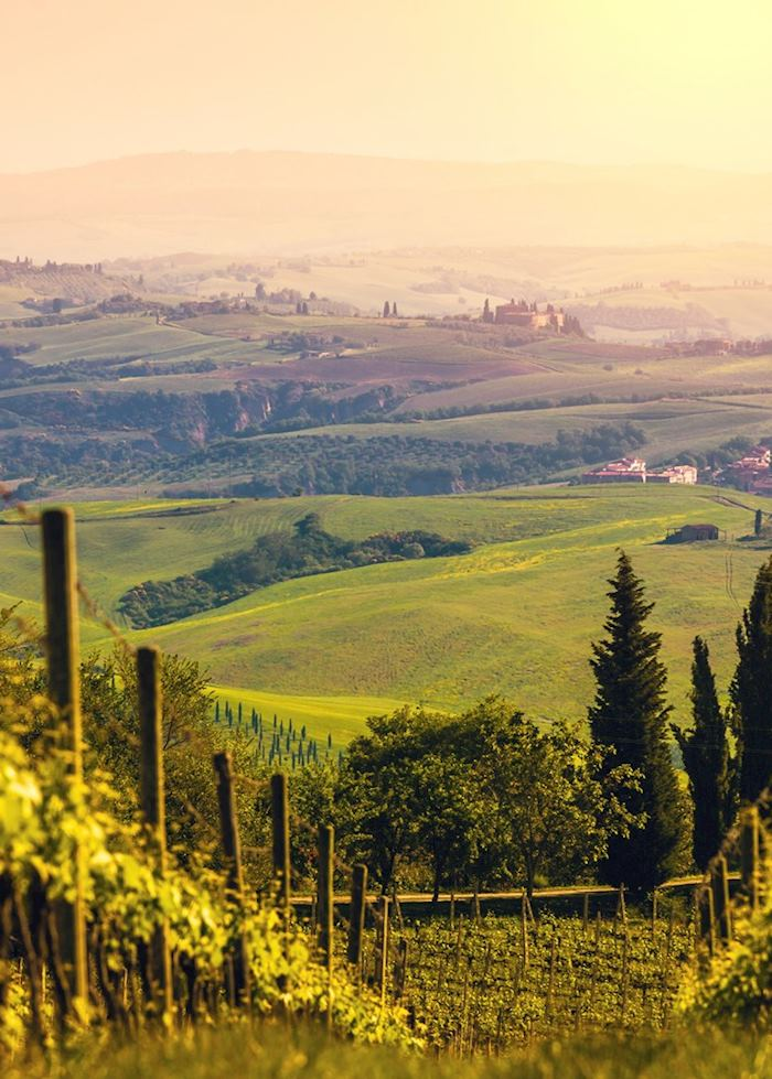 Vineyards, Chianti, Tuscany