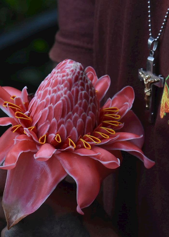 Flower, Fond Doux, Saint Lucia