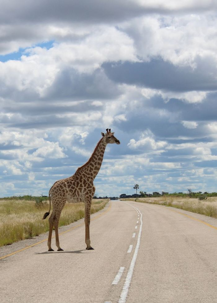 The most likely form of traffic heading out to Nxai Pan