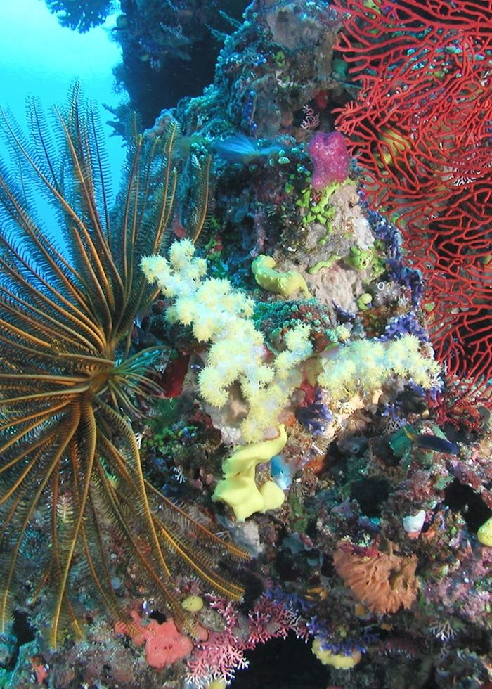 Fiji's beautiful corals