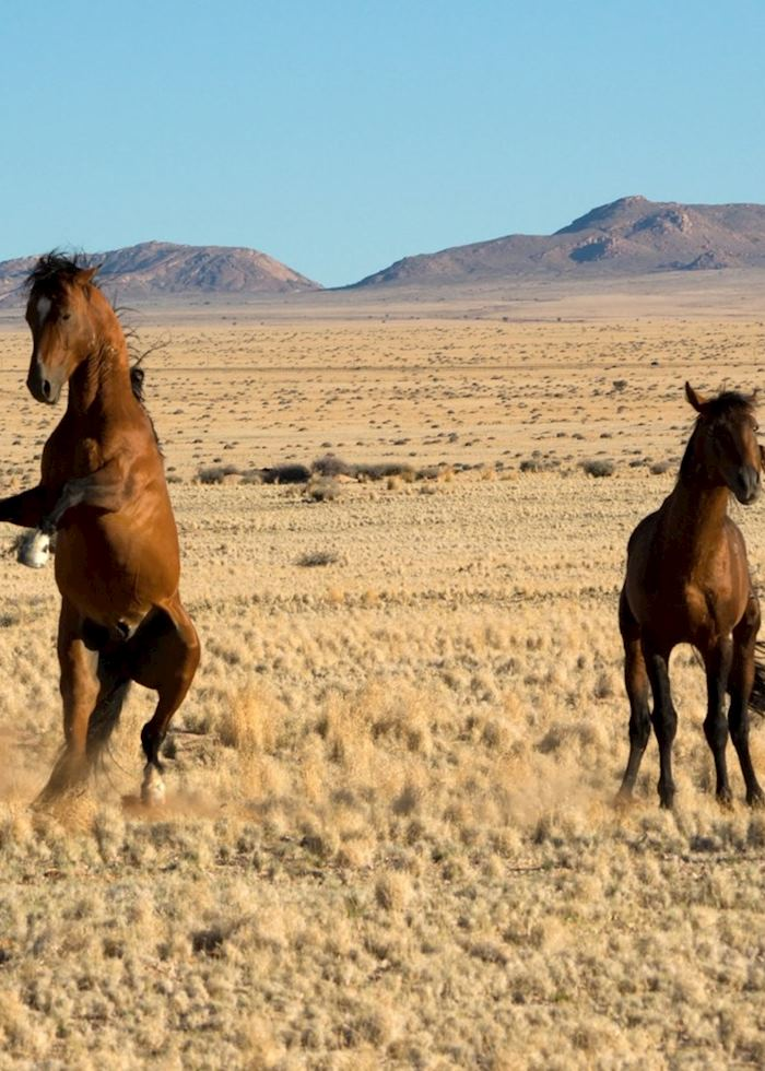 The wild horses at Aus