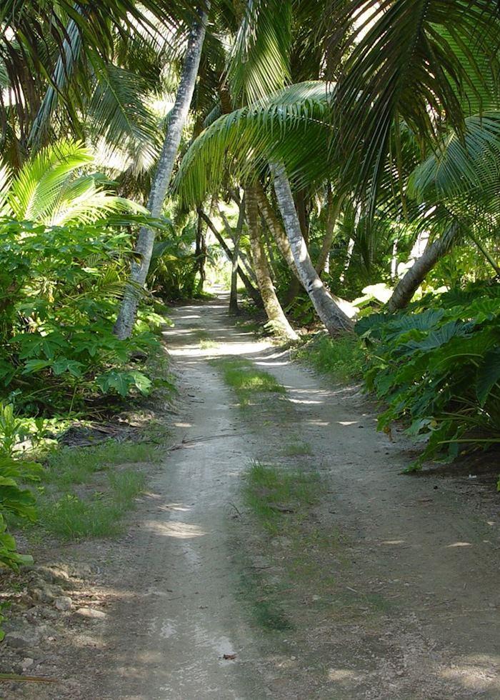 An island path on Bird Island