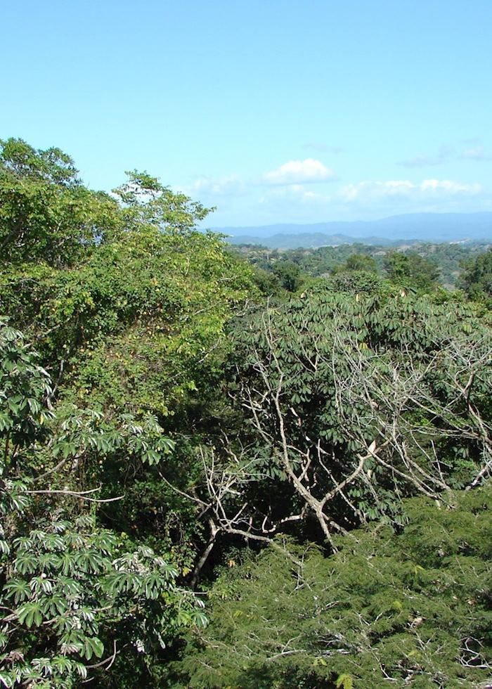 View from Canopy Tower, Panama