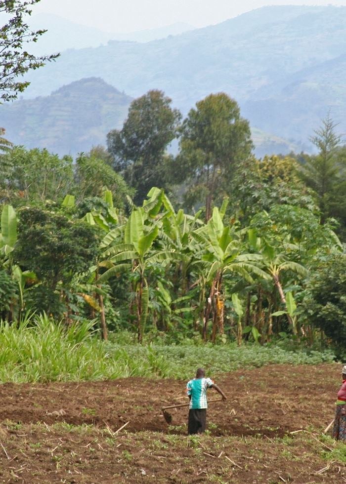 Farmland at the foothills of the Virunga Volcanoes