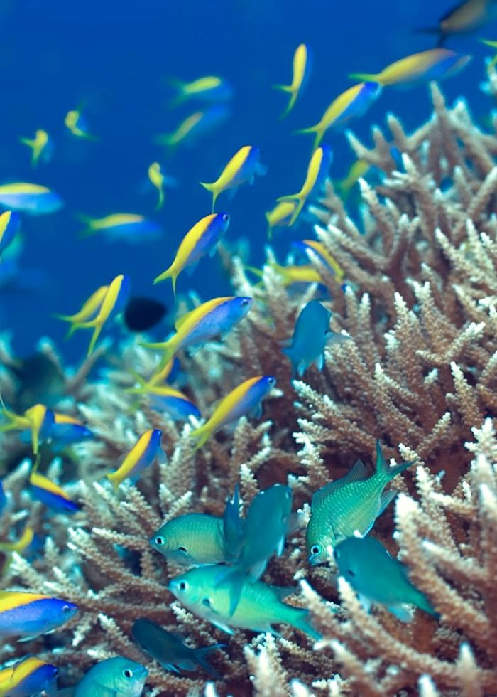 Tropical Fish, The Maldives