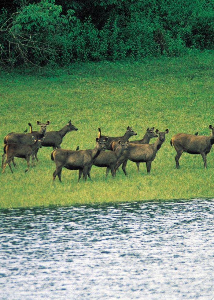 Deer at Nagarhole National Park