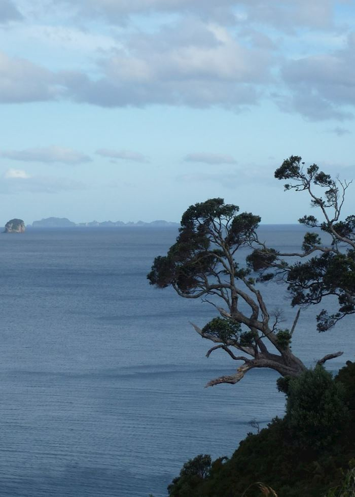 View from Te Pare Reserve, Hahei, Coromandel Peninsula,New Zealand