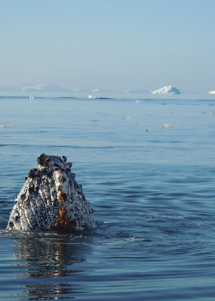 Whale spotting, Antarctica
