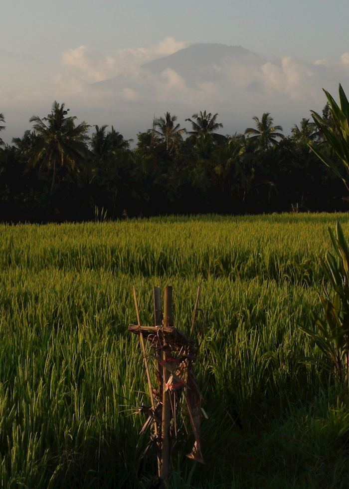 Rice terraces, Indonesia