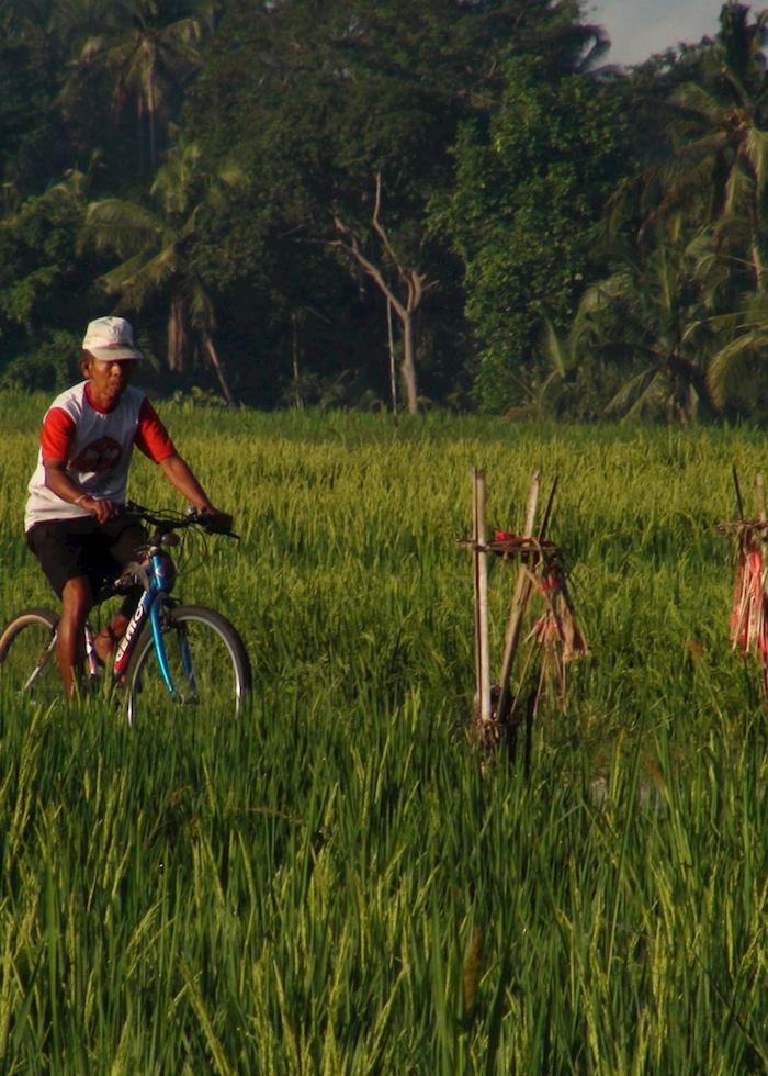 Cycling through rice terraces, Ubud