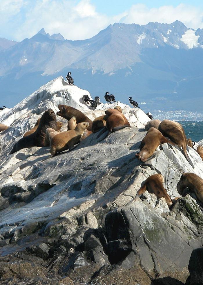 Sea lions, Beagle Channel, Ushuaia