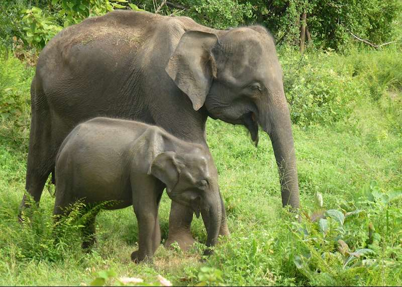 Sri Lanka's wildlife: safaris, jungles and plains