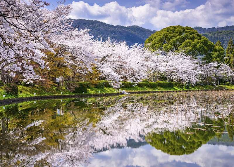 Japan's seasons: cherry blossom and beyond