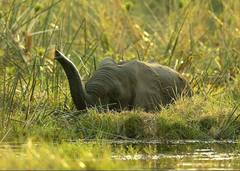 Okavango Delta safaris
