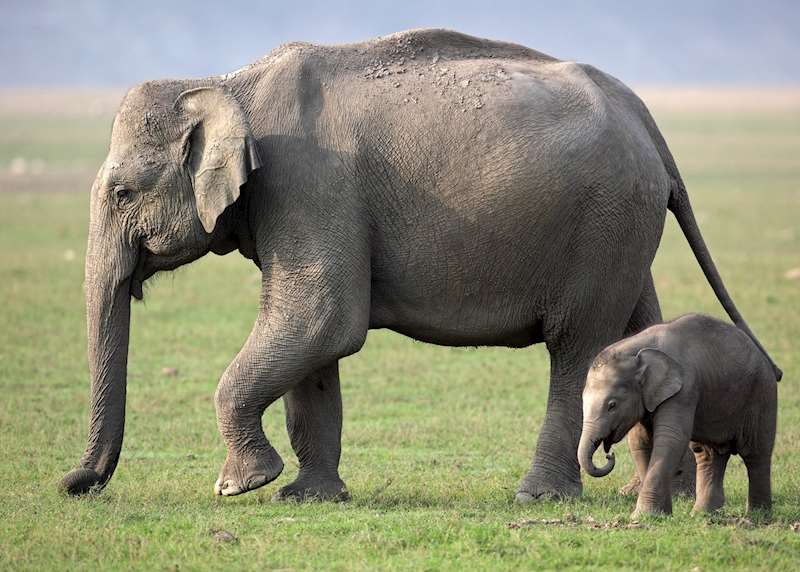 Wildlife and safari tours in India