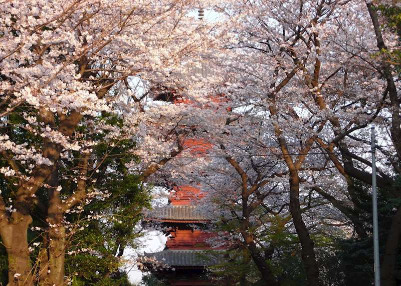 Japan's cherry blossom and other seasons