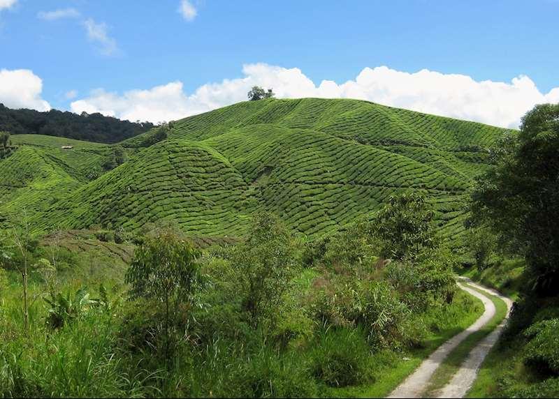 Self-drive holidays in Malaysia