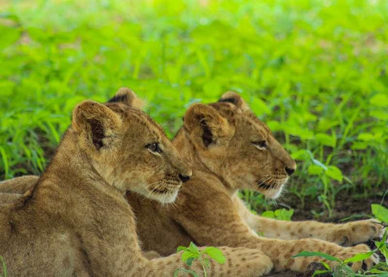 Kenya honeymoons