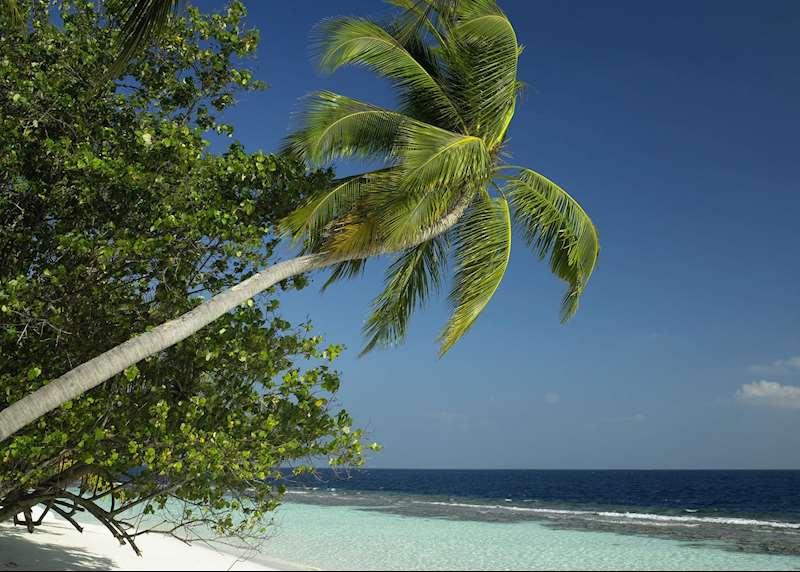 Palm-fringed paradise: honeymoons in the Maldives