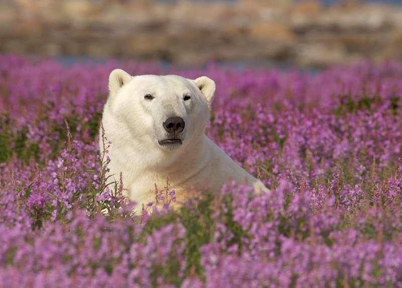 Canada's Arctic, the Yukon & Prairie Provinces