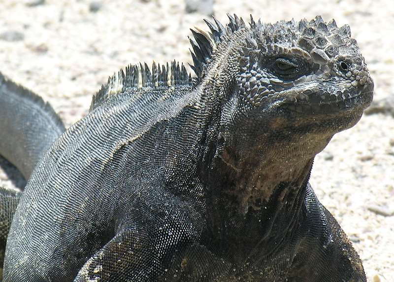 Wildlife highlights of the Galapagos Islands