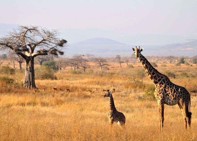 Family safari holidays in Tanzania