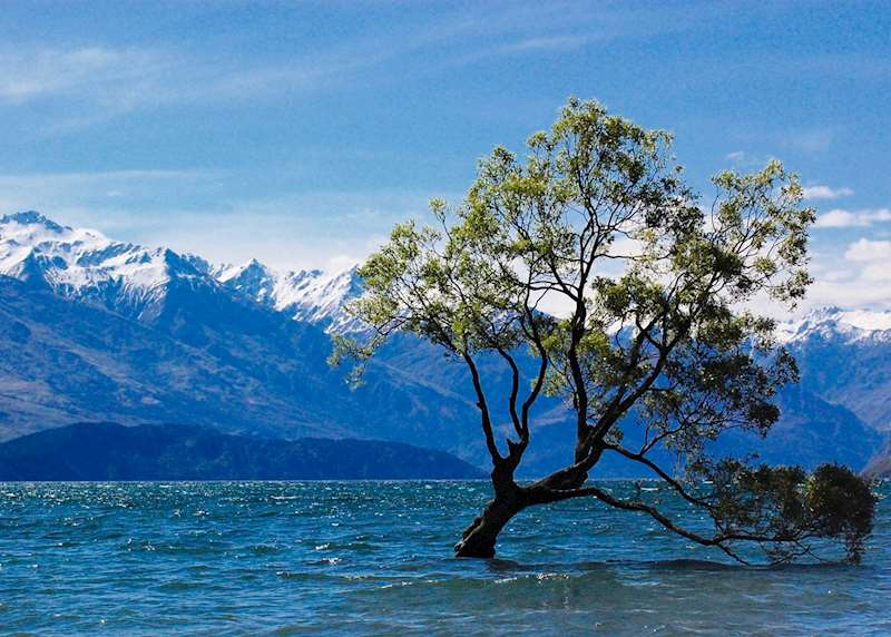 Honeymoons in New Zealand