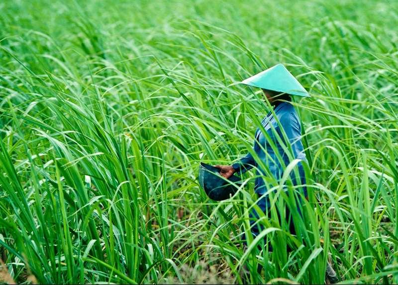 Hidden Vietnam
