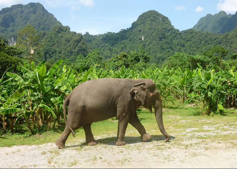 Into the wild: Thailand's national parks