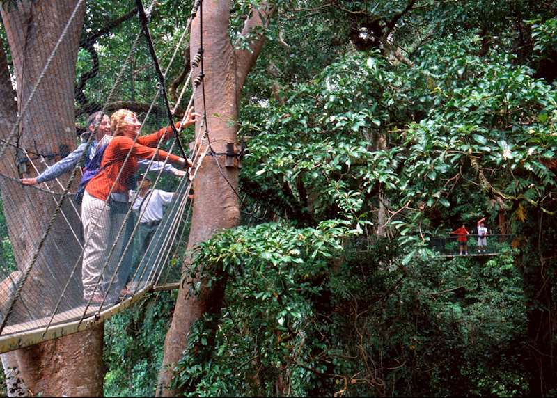 Activity holidays in Borneo