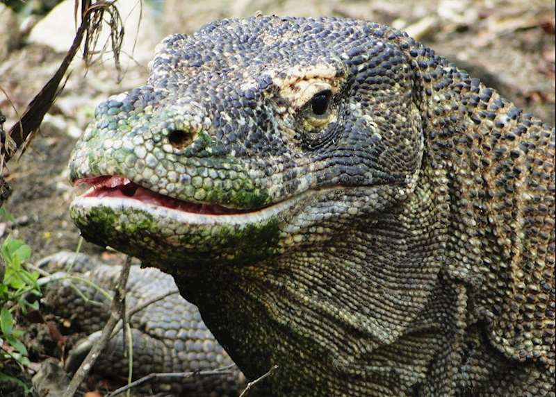 Flores and Komodo: Indonesia's wild frontier