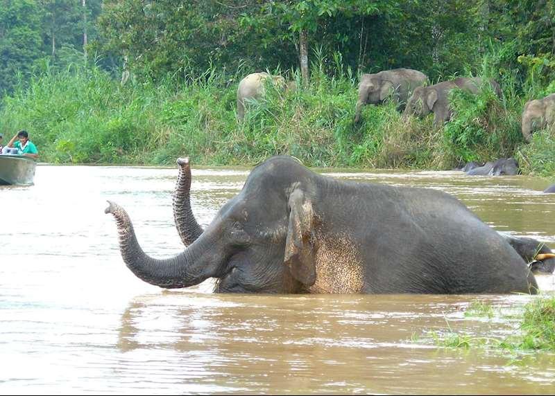 Borneo family holidays