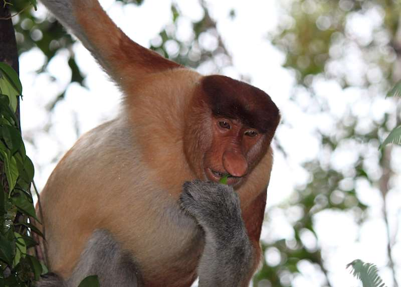 What to see in Borneo: our highlights guide