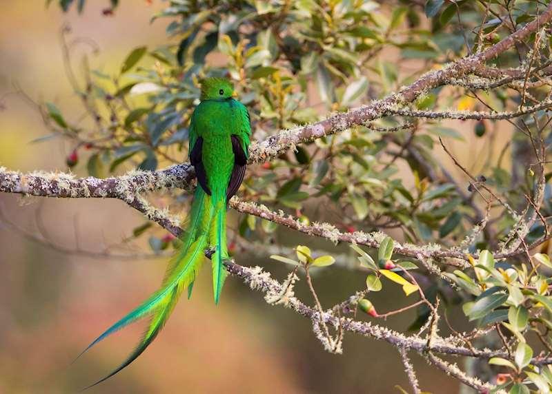 Honeymoons in Costa Rica