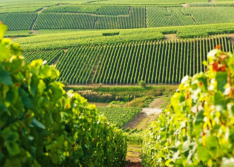 Experiencing wine country in France