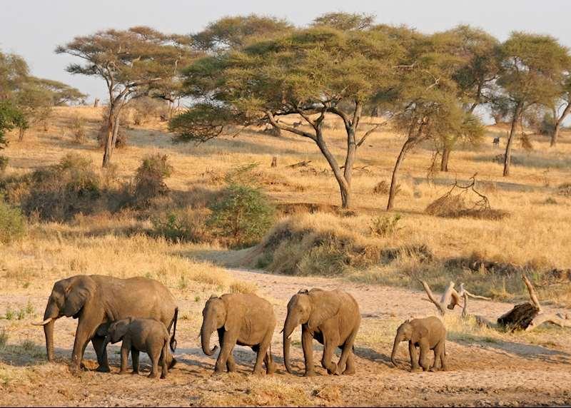 Honeymoons in Tanzania