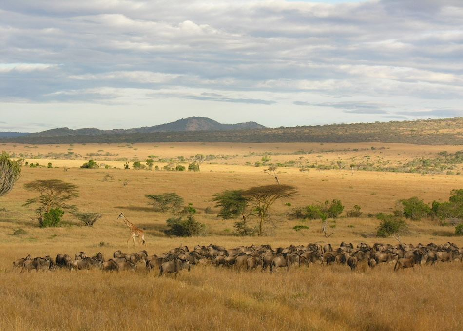 Classic Northern Tanzania Safari Audley Travel
