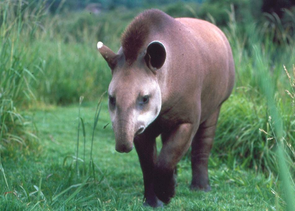 Wildlife Of Brazil Audley Travel