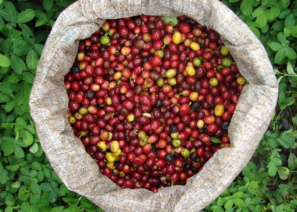 Armenia Coffee Tour